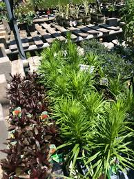 10 photos for dan west garden centers