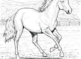 Realistic Horse Coloring Pages To Print For Adults Printable Sheets