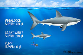 megalodon shark. Perfect Shark Fun Facts About The Megalodon Shark And Megalodon Shark