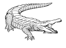 Free Printable Crocodile Coloring Pages For Kids Ms Pinterest