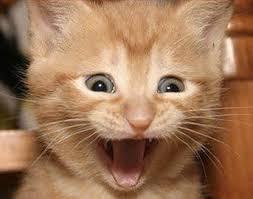 Excited Cat Meme Generator - Imgflip via Relatably.com