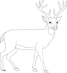 Small Picture Top 78 Moose Coloring Pages Tiny Coloring Page