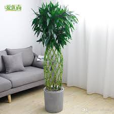 office pot plants. 2018 Bamboo Cage Seed Pot Plants Large Office Room Indoor Air Cleaning Plant Bonsai Decorative Flower Seeds From Seedshop, $0.71 | Dhgate.Com ,