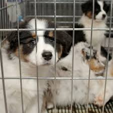 animal shelter pictures.  Pictures Pet Adoption To Animal Shelter Pictures T