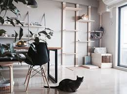 modern cat room design ideas homemydesign