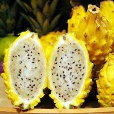Aliexpresscom  Buy Hot Sale Rare Yellow Pitaya Fruit Trees Seeds Non Gmo Fruit Trees For Sale