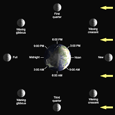 Lunar Phase Chart Phases Of The Moon Lunar Cycle Diagram Shapes Pictures