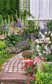 Romantic Cottage Garden Aquilegia Columbine Dianthus Digitalis Romantic Cottage Gardens