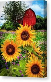 <b>AZQSD Diamond</b> Embroidery Sunflower Needlework 5D DIY ...