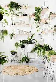 11 houseplants display ideas 5