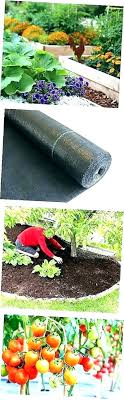 paper weed barrier butcher newspaper