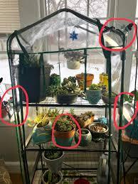 Succulent Grow Light Setup Succulent Grow Light Setup Album On Imgur