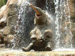 Image result for elephant pet