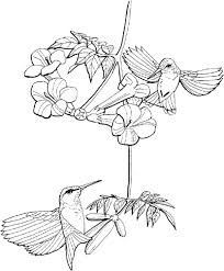 Small Picture Hummingbird coloring page 1
