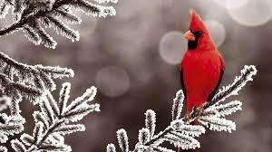 Winter Animals Desktop Wallpapers - Top ...