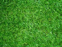 grass field texture. Artificial Grass Field Top View Texture \u2014 Photo By Noppharat_th