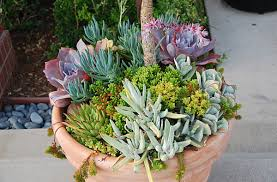 View in gallery Color in a planter of succulents