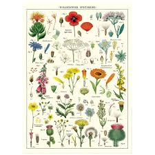 Wildflowers Species Chart Vintage Style Poster