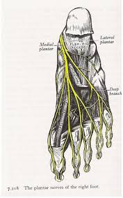 Nerves Of The Foot Foot Ankle Orthobullets