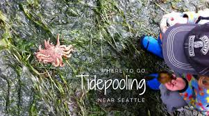 Seattle Tide Chart 2017 Tide Pool Party Where To Spot Cool Marine Life Near Seattle