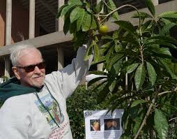 Urban Harvest Annual Fruit Tree Sale Jan 15  Houston On The CheapFruit Tree Sale Houston