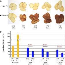 Suppression Of The Vacuolar Invertase Gene Prevents Cold