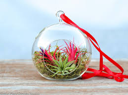 Air Plant Terrarium Vibrant Hanging Air Plant Terrarium Air Plant Design Studio
