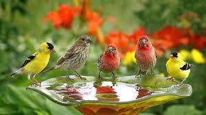 birds wallpaper. Exellent Birds Birds Wallpapers Cute Drink Water For Wallpaper R