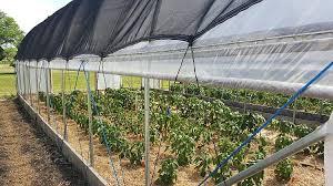 garden shade cloth. How To Pick A Greenhouse Shade Cloth Garden S