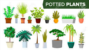indoor home office plants royalty. Potted Plants Set Vector. Indoor Home, Office Modern Style Houseplants. Green Color Home Royalty H