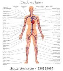 Vein Diagram Stock Illustrations Images Vectors