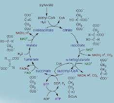 physiological chemistry assignment help biotechnology assignment  physiological chemistry help code