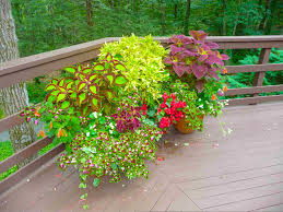 Small Picture Garden Design Garden Design with Container Gardens Ronni Hock