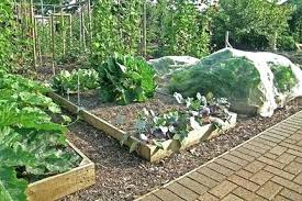 best soil for vegetable garden. vegetables for raised garden beds quick facts best soil vegetable s