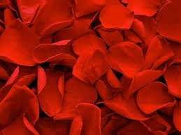 Bed of Roses Rose Petals