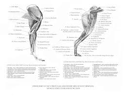 Pin By Lisa Newcomer On Greyhounds Dog Anatomy Cat