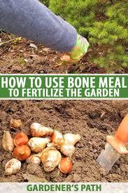 Friend Or Foe Learn How To Use Bone Meal Gardeners Path