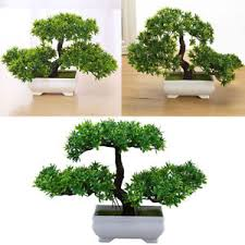 office bonsai. Beautiful Office Image Is Loading 18x27cmArtificialBonsaiTreewithPot Intended Office Bonsai