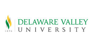 how to write a transfer essay that works collegexpress delaware valley university