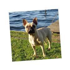 Hundesprüche Instagram Stories Photos And Videos