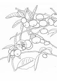 Small Picture Mandarin Orange Tree fruit coloring page for kids fruits coloring