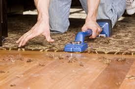 gigantic carpet vs hardwood cost flooring the great showdown