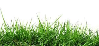 Grass Background Grass Crowd Cow Grass Mutt Maddness