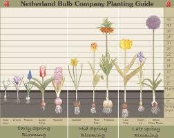 Bulb Planting Depth Chart Planting Bulbs Garden Bulbs
