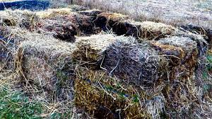 Image result for compost fertiliser