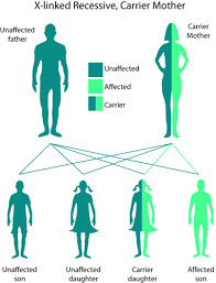 Pedigree Chart For Free Or Attached Earlobes 3 11 Mendelian Inheritance In Humans Biology Libretexts