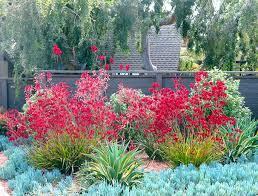 low maintenance californian garden