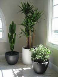 Office pot plants Tropical Big House Plants Big Indoor Plants Indoor Office Plants Big Plants Best Avril Paradise Pin By Tiffany Valverde On Pots Pinterest Office Plants Plants