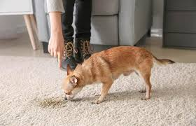 how to remove pet stains on carpets