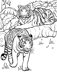 Zoo Animal Coloring Pages Realistic Tiger Coloringstar